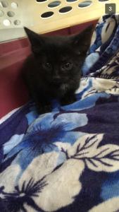 Meet Emmie, world!